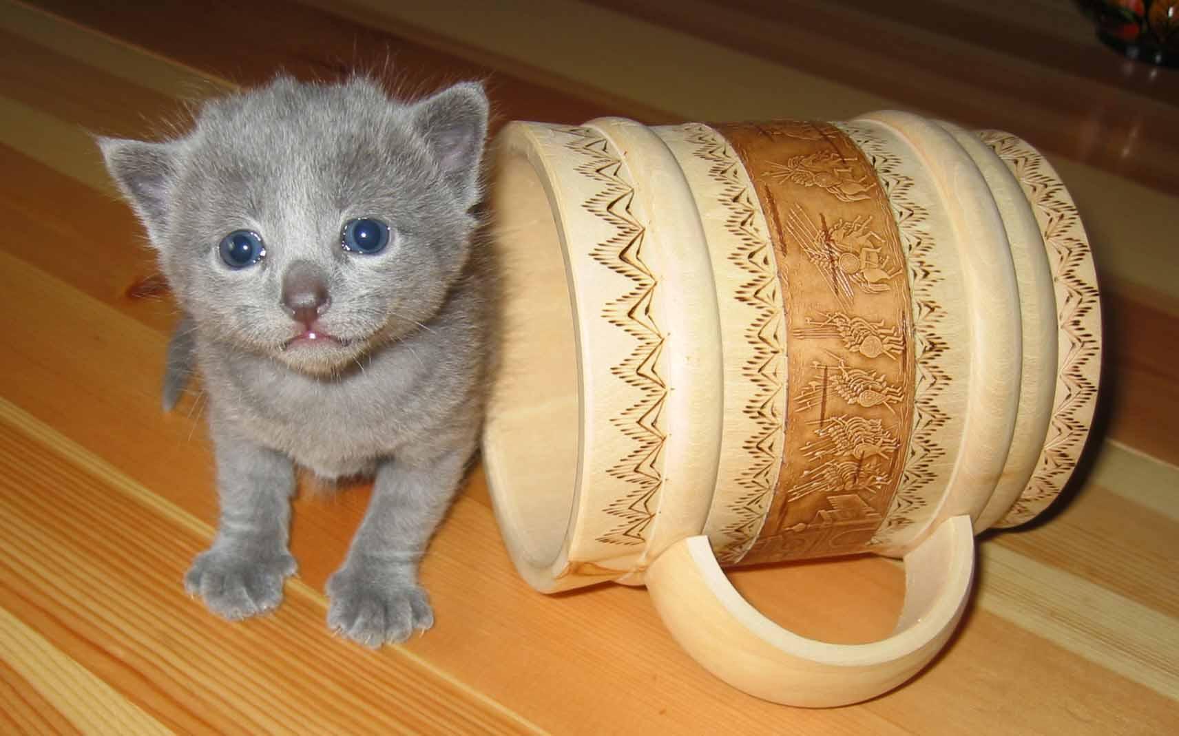 К чему снится подарок котенка 58